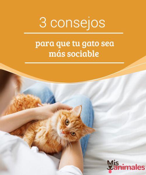 3 consejos para que tu gato sea más sociable   Te traemos una serie de consejos para conseguir que tu gato sea más sociable. Para empezar, debes armarte de mucha paciencia.  #Consejos #Sociable #Paciencia #Gato