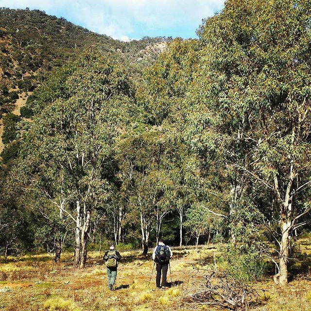#shoalhavengorge #bushwalking