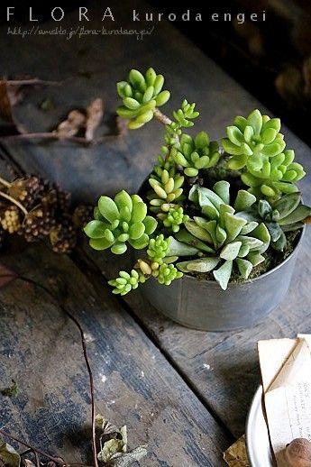 多肉植物の寄せ植え |フローラのガーデニング・園芸作業日記