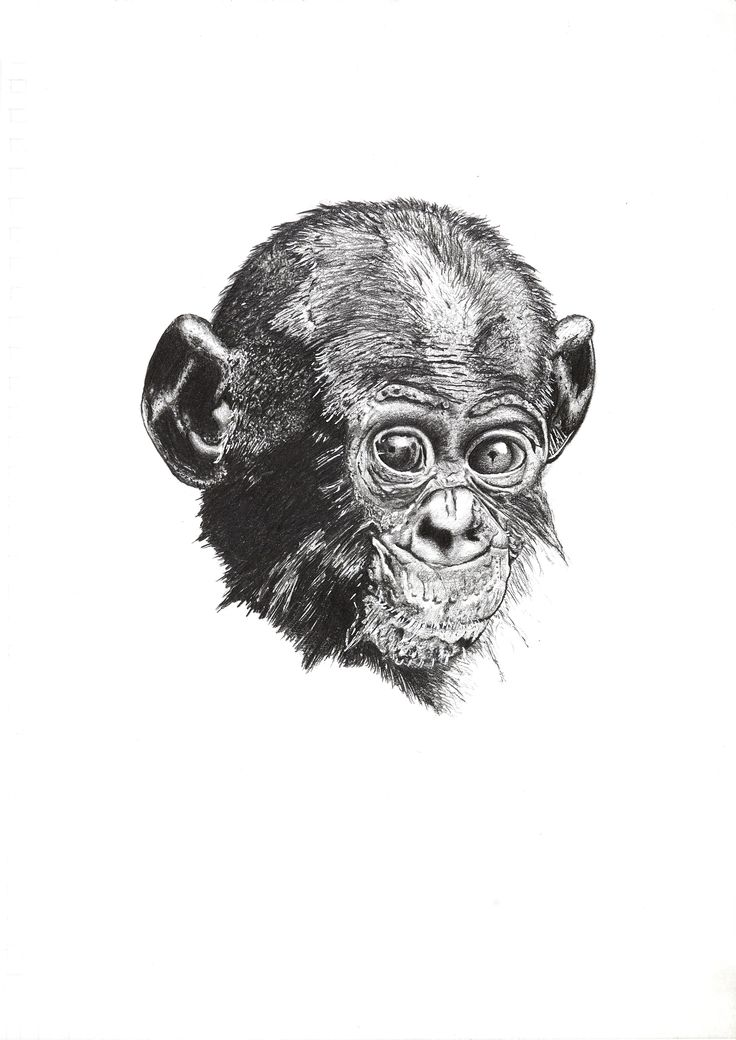 Ape. (inspired by planet of the apes)