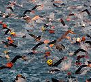Triathlon Swimming - Tops Tips from Swim Smooth, Get The Best Out Of Yourself In Your Next Tri
