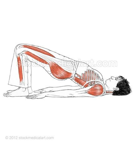 1000 images about yoga anatomy book on pinterest  yoga