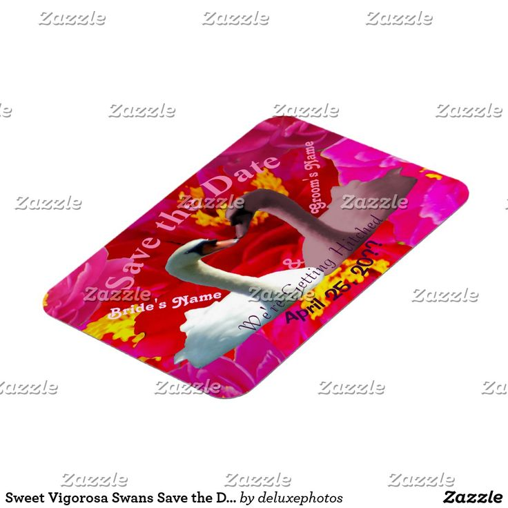 Sweet Vigorosa Swans Save the Date Magnet