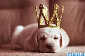 The new king of puppy land.