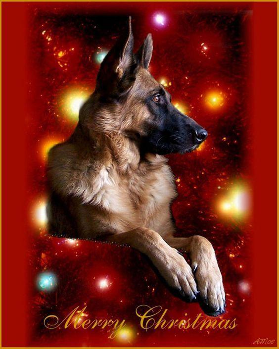 20 Best German Shepherd Christmas Cards Images On
