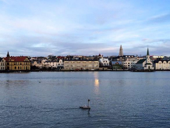 Reykjavikurtjorn: Un lago en el que cisnes y patos nadan tranquilamente en el centro de Reikiavik. Más en diariodeabordoblog.com