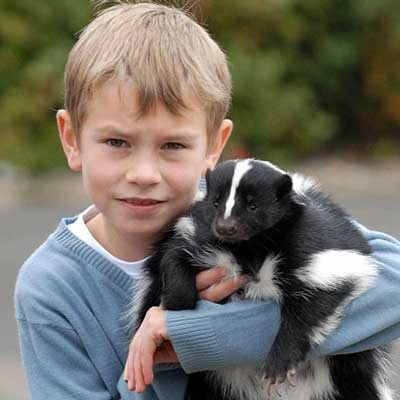 Another one of the same boy and his skunk