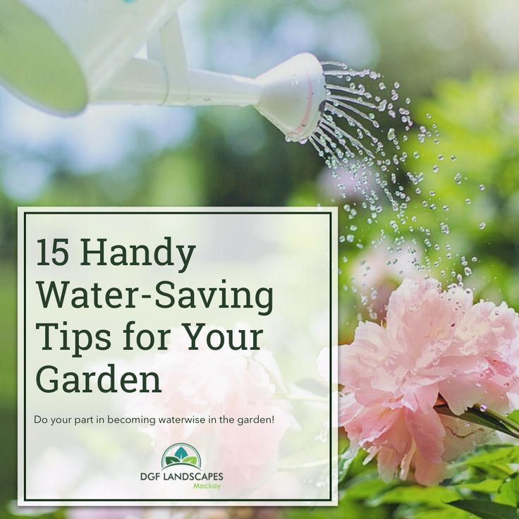 15 Handy Water-Saving Tips for Your Garden   DGF Landscapes Mackay