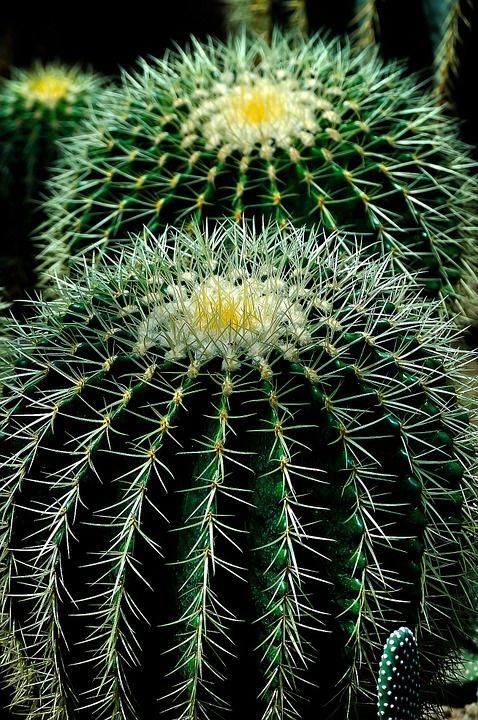 Cacto, Planta, Círculos, Natureza, Verde, Flor, Natural