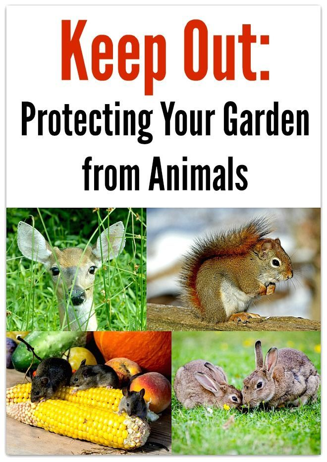 Good to keep in mind for the spring keep out for How to keep animals out of your garden