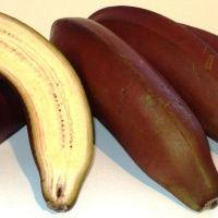 Red Dacca Banana