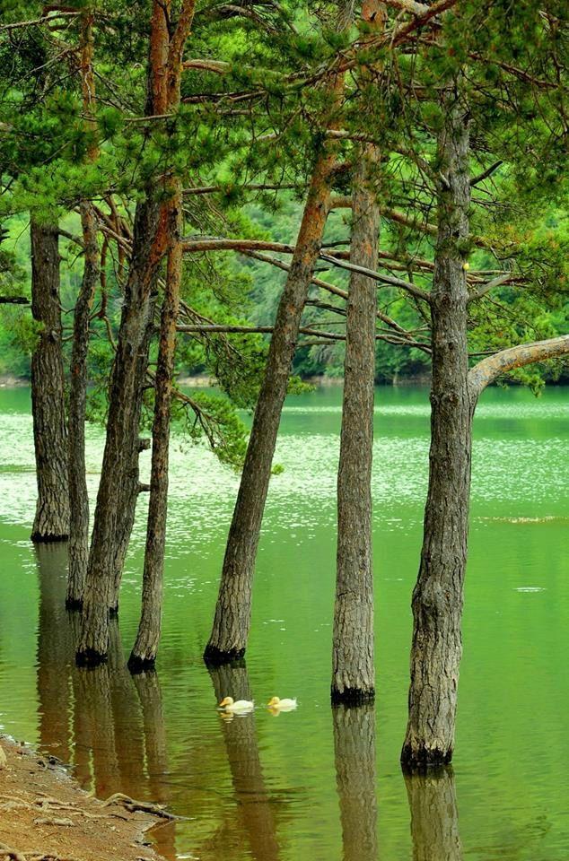 İğneada Longoz Ormanları Millî Parkı...Demirköy, Kırklareli