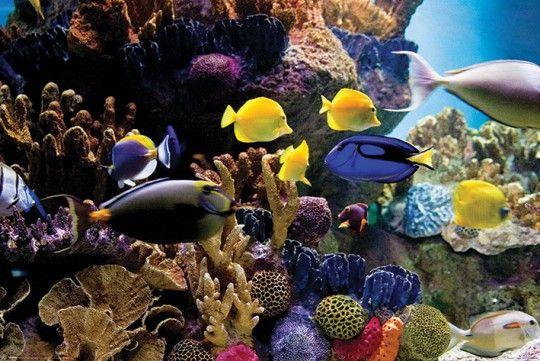 Ryby Tropikalne Rybki Rafa Koralowa – plakat