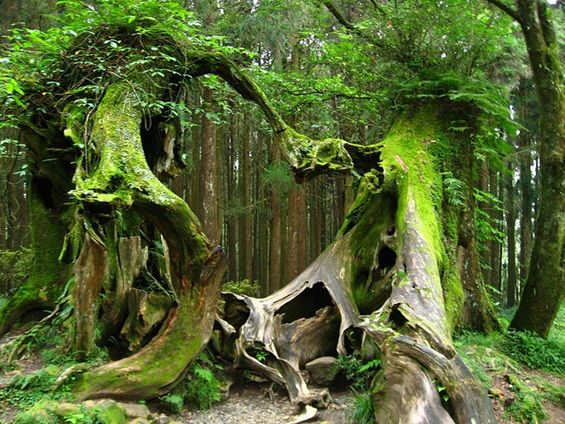 The world's scariest forests - Hoia Baciu, Transylvania, Romania - trees grow in odd shapes, and there is a circle deep within where nothing grows, and apparitions are seen. People have been known to disappear, strange lights have been seen, and the wind seems to speak. There is always a feeling of being watched....