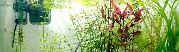 5 Best Freshwater Aquarium Filtration Systems