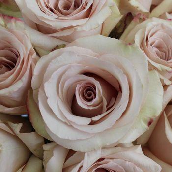 Quick Sand Blush Roses