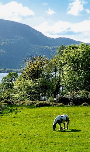 Killarney National Park, County Kerry, Ireland. Killarney is one of my favorite places I've traveled to. I'd like to go back.