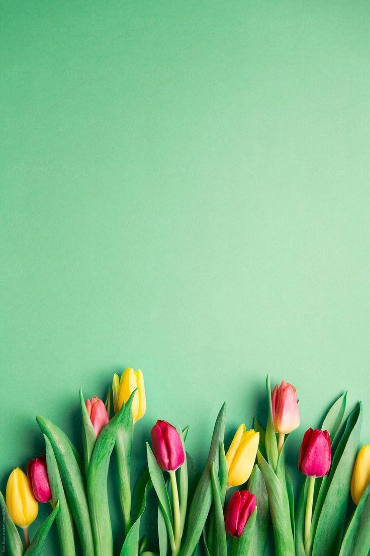 Flower Flores Fondos De Pantalla Verde Fondos De Pantalla Tulipanes Fondos De Pantalla De Primavera