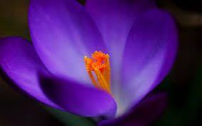 En biología, se denomina plantas a los seres vivos fotosintéticos, sin capacidad locomotora y cuyas paredes celulares se componen principalmente de celulosa.
