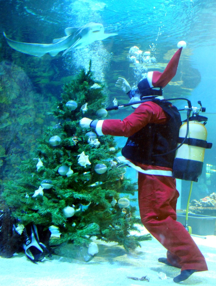 Budapest | Tropicarium: Santa Claus attracts sharks. view on Fb https://www.facebook.com/BudapestPocketGuide credit: Tropicarium #budapest #santaclaus