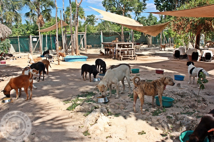 Animal rescue in Cancun Mexico.  check it out.  www.tierradeanimales.org