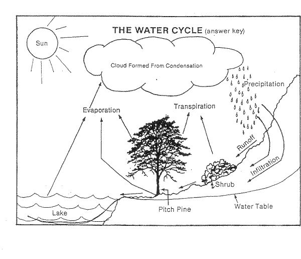 Label Water Cycle Diagram Worksheet Label free download water – The Water Cycle Worksheet Answers