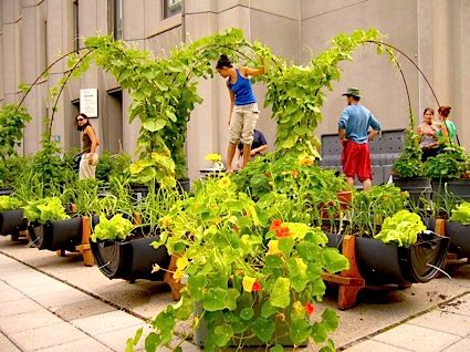 35 best Inspiration Kitchen Gardens images on Pinterest Edible
