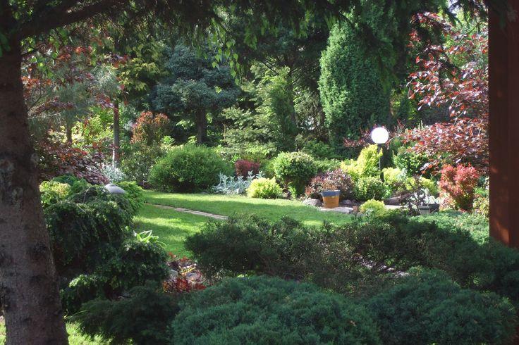 Mój ogród 2015