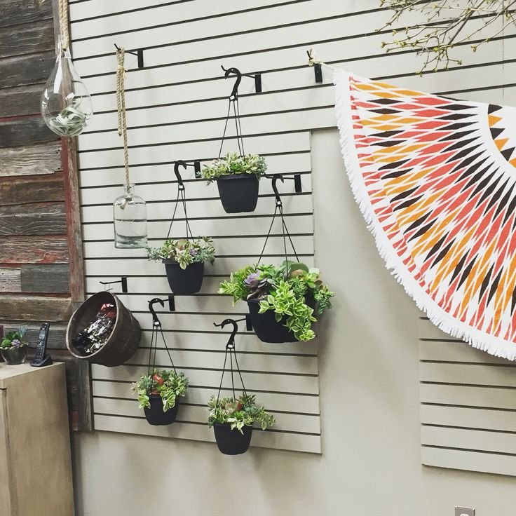 Hanging succulent planters, hanging air plants, and Tofino towels!
