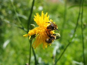 Interesting Facts about Bees That You Probably Never Knew