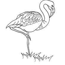 Flamingo picture to color - Coloring page - ANIMAL coloring pages - BIRD coloring pages - FLAMINGO coloring pages
