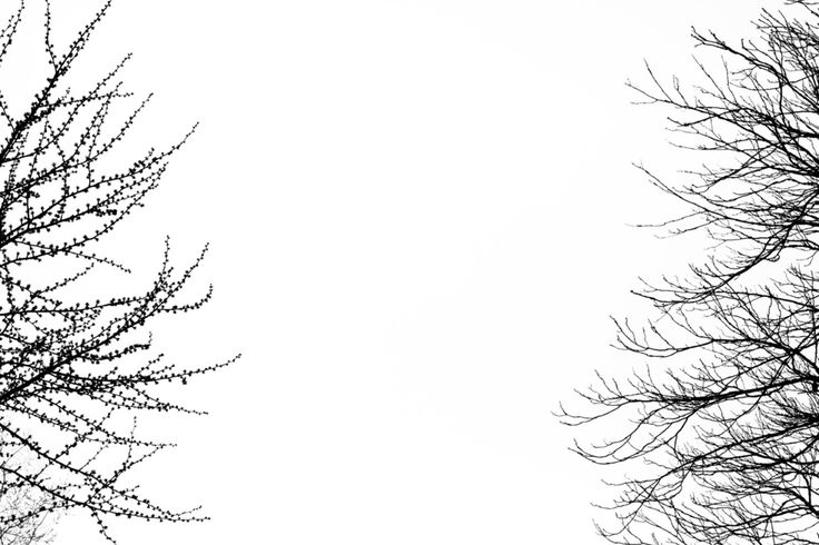 Billy KIDD :: from the TREES Series