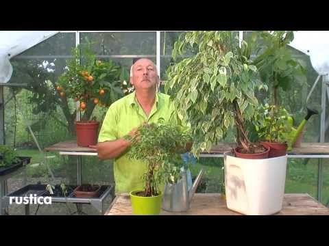 RusticaTV , la chaine jardin du magazine jardin Rustica. Créé en 1928, Rustica est l'unique hebdomadaire de la presse jardin en France. Au potager, au verger...