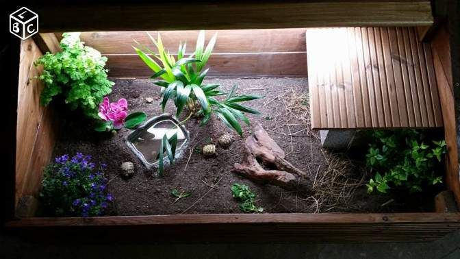 best 25 terrarium tortue de terre ideas on pinterest. Black Bedroom Furniture Sets. Home Design Ideas