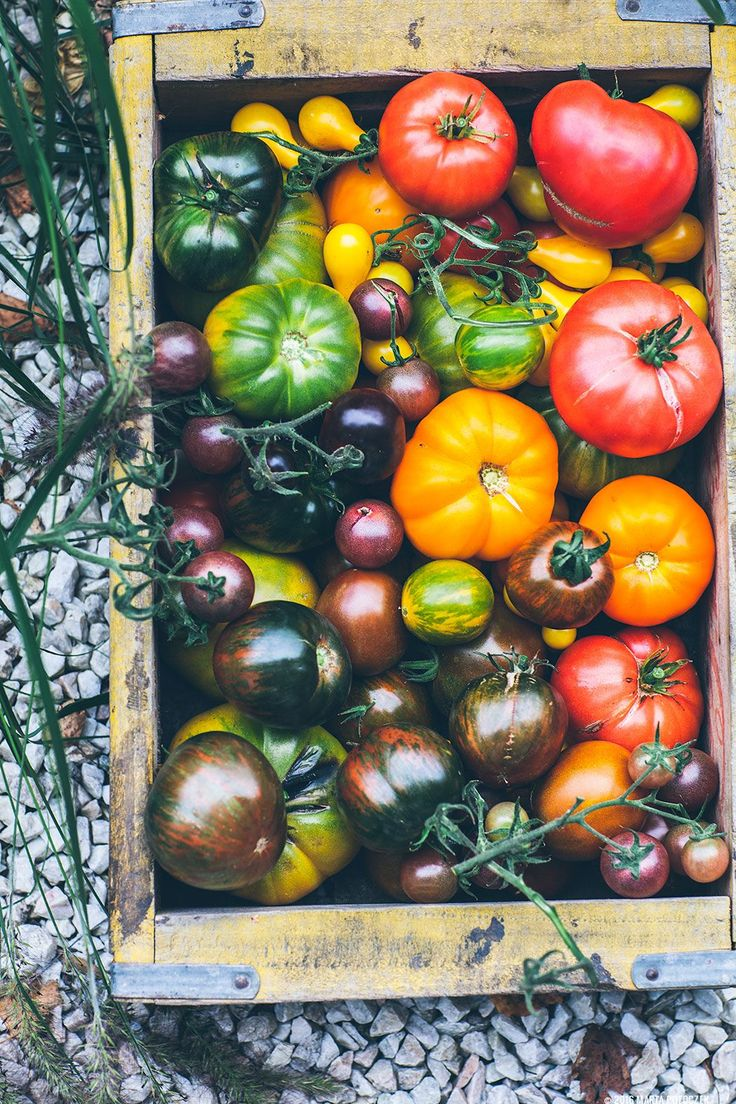 A Guide To Tomatoes Classification Growing Tomatoes 400 x 300