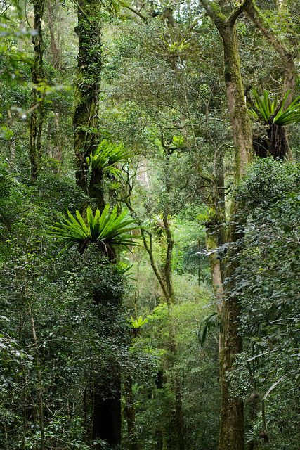 Mt. d'Ambre National Park, Madagascar - jungles, mountains, beaches and deserts, Madagascar has it all!
