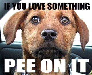 My dog agrees