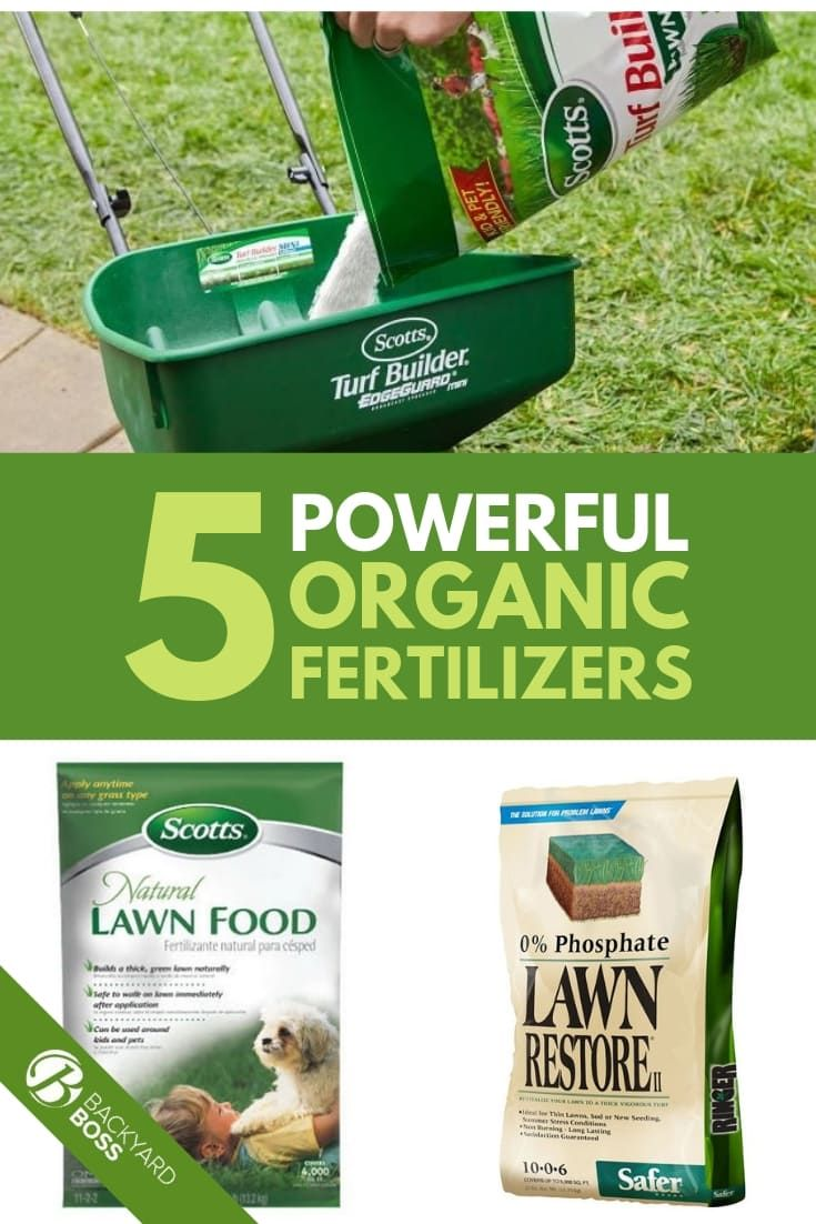 Best Organic Lawn Fertilizer Reviews Organic Lawn Fertilizer