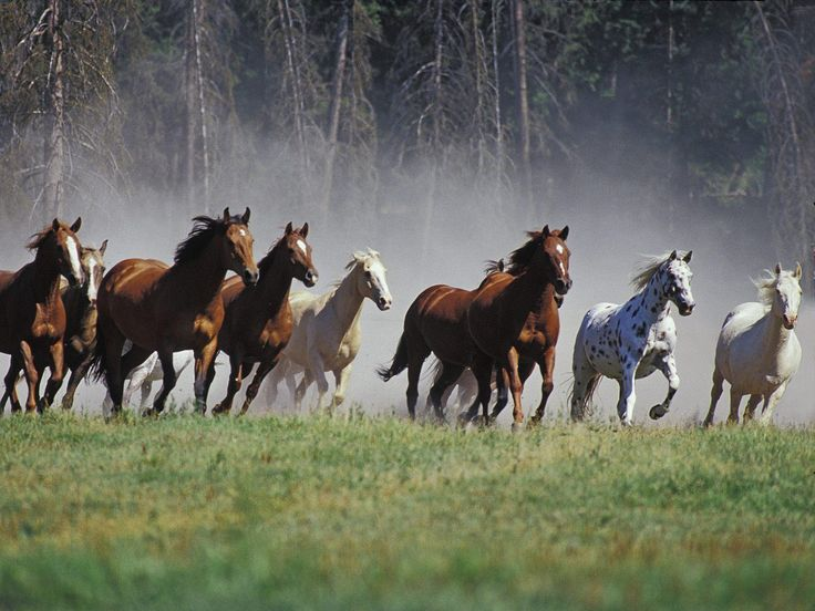 Best 25 horse wallpaper ideas on pinterest drawing rain wild horses wallpapers wallpaper cave voltagebd Image collections