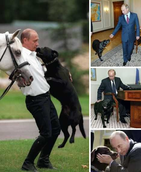 Putin owns a black Labrador Retriever named Koni, who often enters conference rooms during high-level meetings and puts attendees to the sniff test.