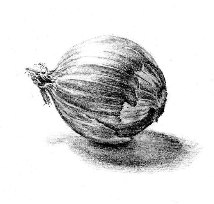 Onion Drawing Onion Drawing