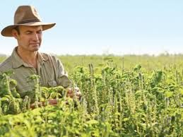 Image result for free images kununurra wa farming