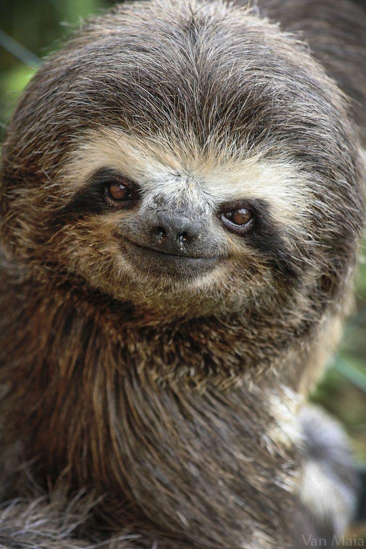 Sloth going to the bathroom - Smiley Sloth Photo Van Maia On 500px