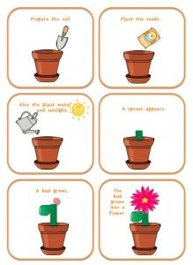 spring garden flower life cycle preschool printable