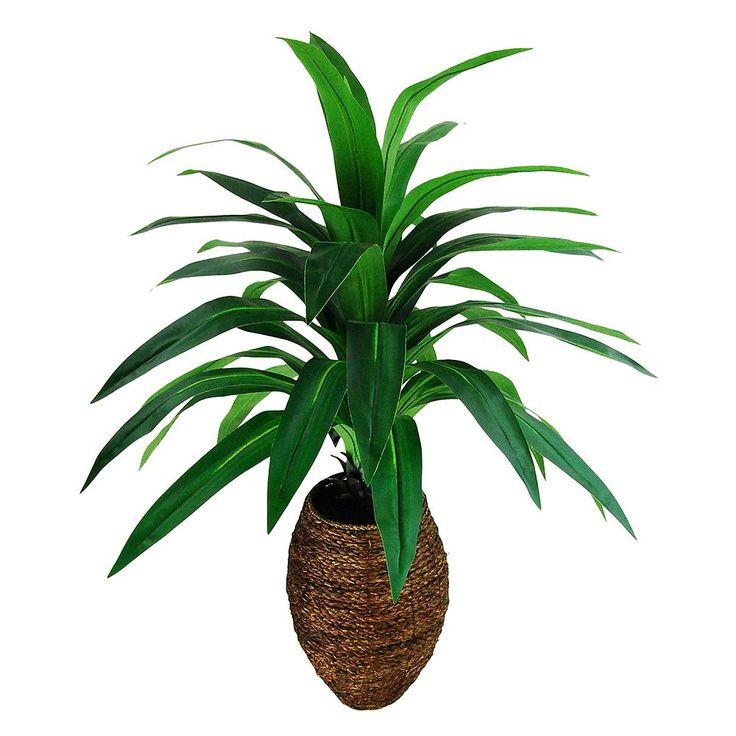 25 best yucca palme ideas on pinterest flora palmen. Black Bedroom Furniture Sets. Home Design Ideas