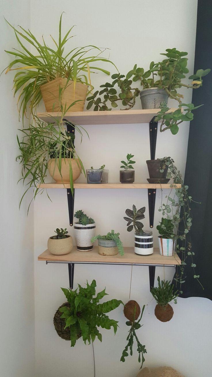 Plante hylder, planter, planteplaneter