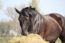 7 Tips for Winterizing Your Senior Horse