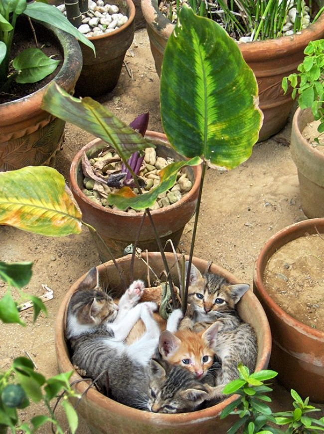 Cats in blossom
