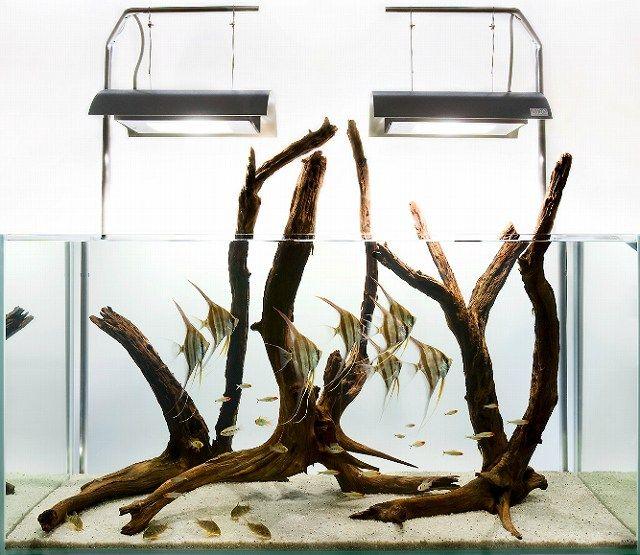 画像 : センスの良い水槽レイアウト画像集【アクアリウム】 - NAVER まとめ