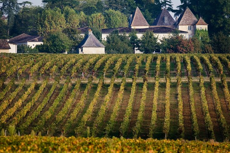 Découvrir les vignes du château Carbonnieux c'est possible, grâce à Wine Tour Booking.  Il vous suffit de réserver votre venu sur Wine Tour Booking. http://bordeaux.winetourbooking.com/fr/propriete/chateau-carbonnieux-74.html